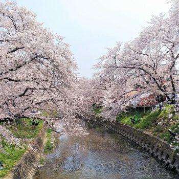 春のエレガントカジュアル!!!
